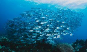 fishes underwater
