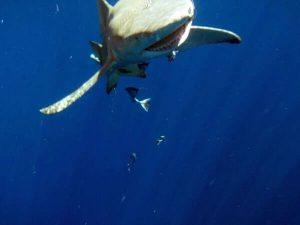 diving_10
