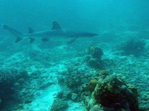 diving_15