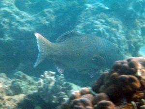 diving_45